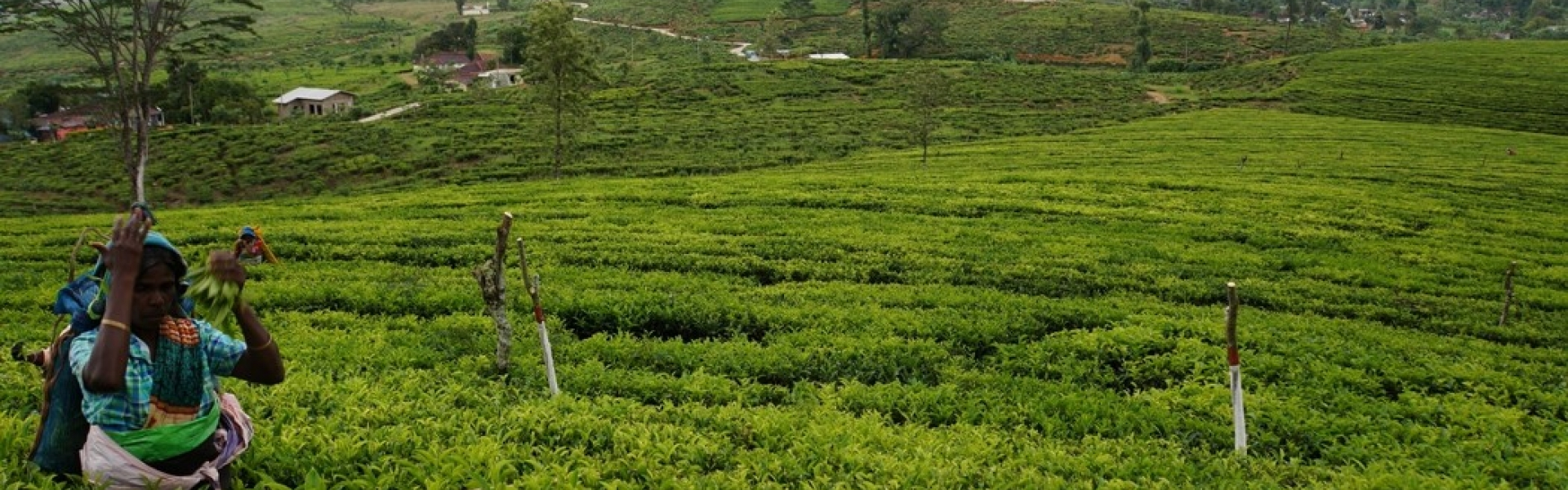 New project evaluation visit of Fair-grounds Foundation to Abbotsleigh Tea Estate